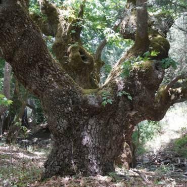 Natur erleben auf Kreta